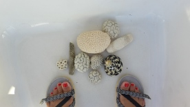 Coral fossils turned into pebbles by the sea