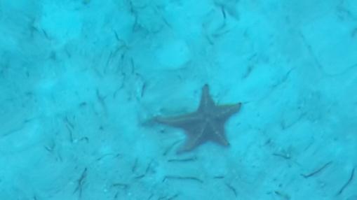 Starfish boogie at Abrahams Bay