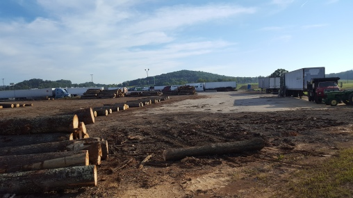 Trucks and lumber yards just go together somehow