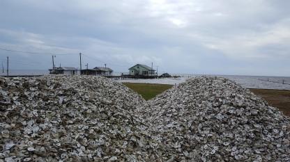 Oyster shells dump